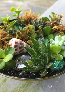 a lush miniature peace garden