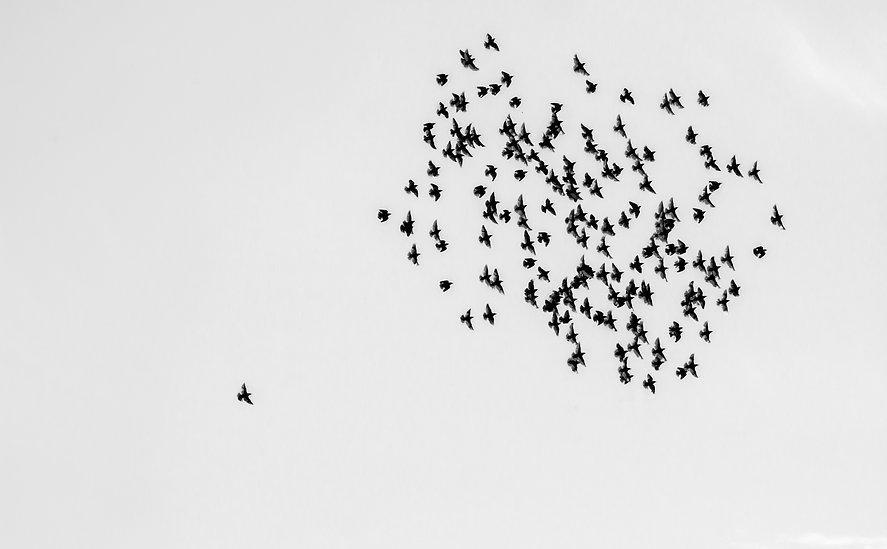 birds-1714542.jpg