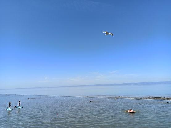 seagull day.jpg