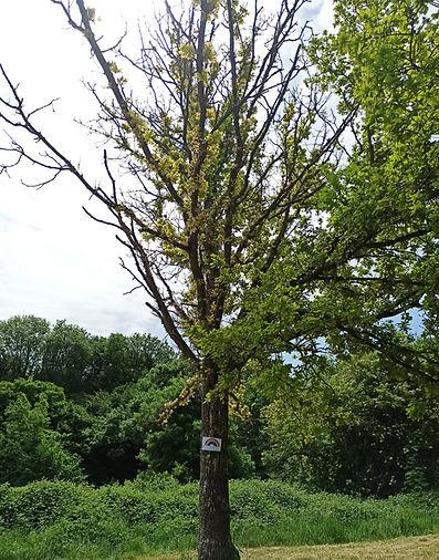 nhs tree 1.jpg