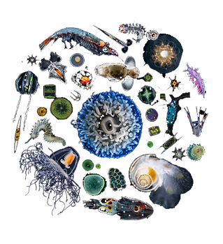 Plankton_thumbnail_500x500.png