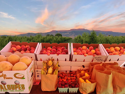 Fruts Stand in Organic Orchard