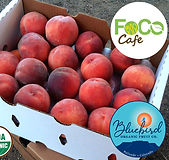 Colorado Peach Company Homepage FoCo Cafe Fundraiser_edited.jpg