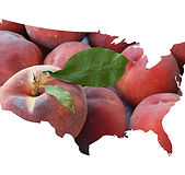 colorado palisade peaches nationwide shipping usa.jpg