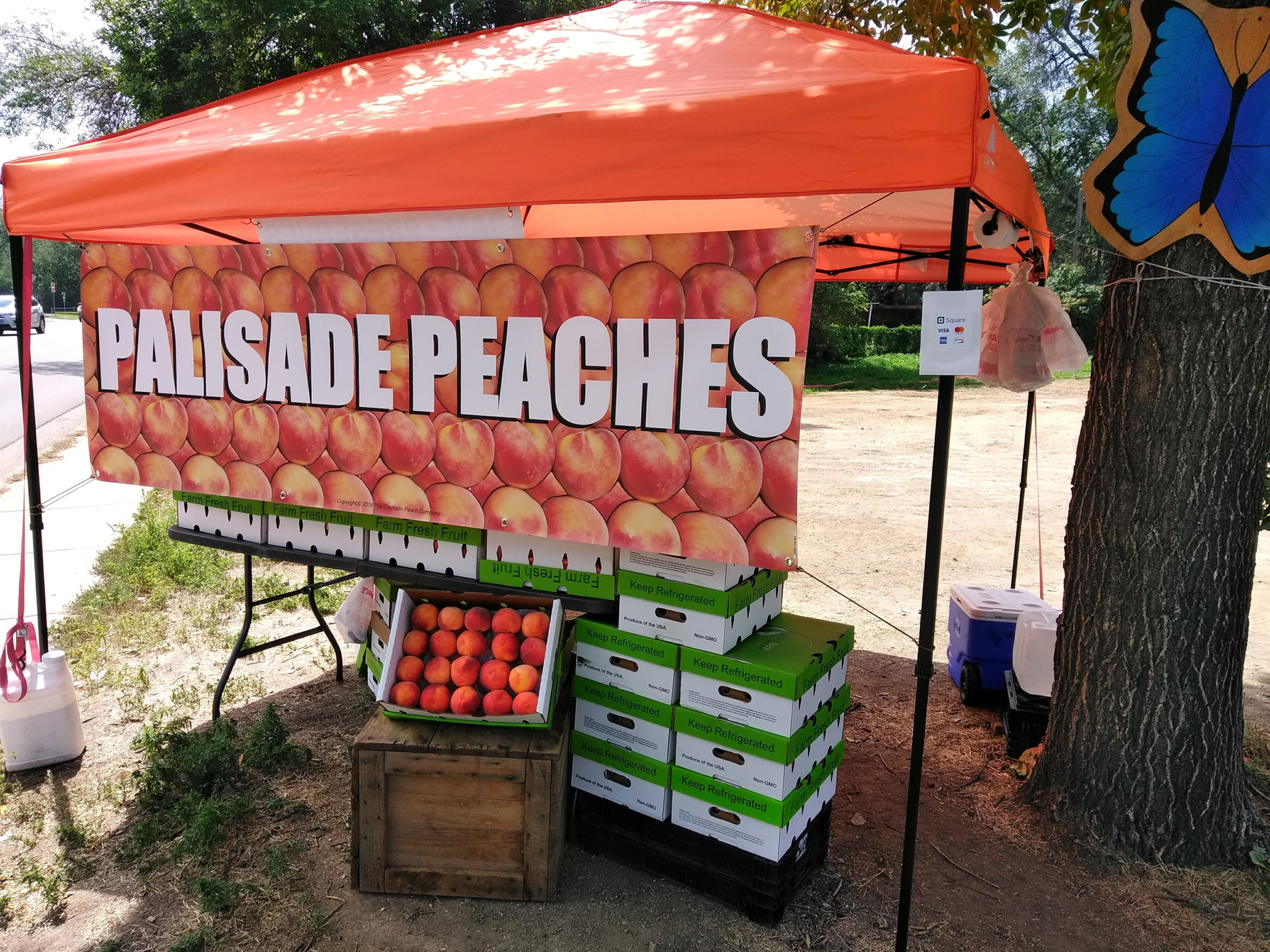 Palisade Peaches Fort Collins 2019 | The Colorado Peach Company