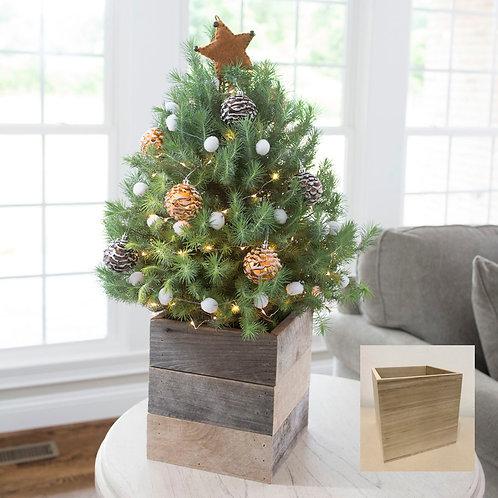 Mini Christmas Tree *Live