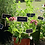 Thumbnail: Plant markers - eco friendly