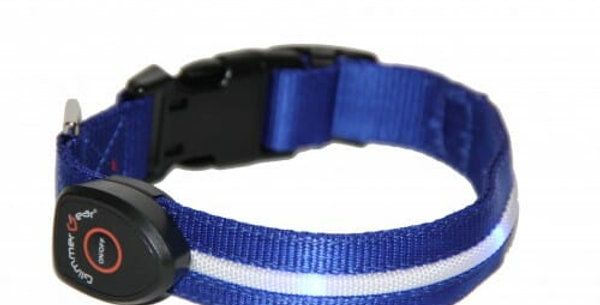 Glimmer Gear USB Rechargeable LED Dog Collar
