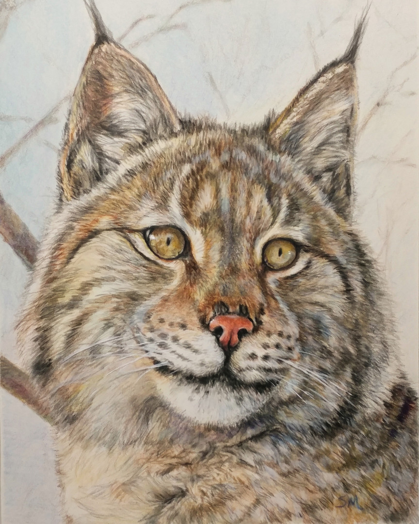 Mixed Media Bobcat Drawing