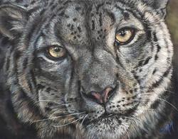 Snow Leopard Pastel - SOLD!