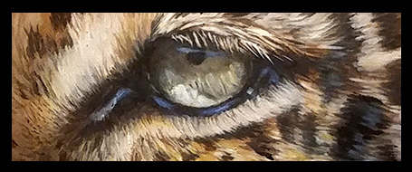 Leopard Eye Close-up