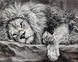 Lion In Repose 15x30 - SOLD