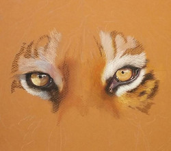 Tiger Eyes - Example Only