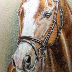 Horse Sketch - SOLD!