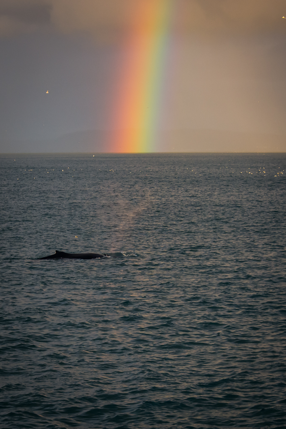 Humpback and Rainbow