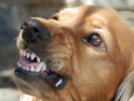 Riflessioni sull'influenza del Covid-19 : le similitudini tra uomo e cane. L'aggressività.