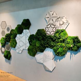 Beehive-pattern moss frames - MAO TRUNG Showroom