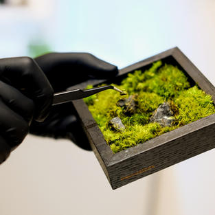 The Making of Moss Frames
