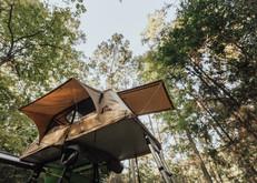 Woolly Bear Sam Houston National Forest-46.jpg