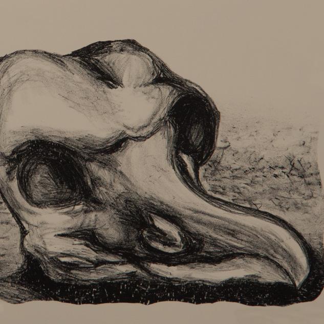 Untitled Bird Skull.png