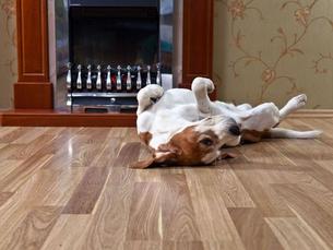 ROCOCO地板 時尚居家理想選擇