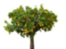 FruitTree copy.png