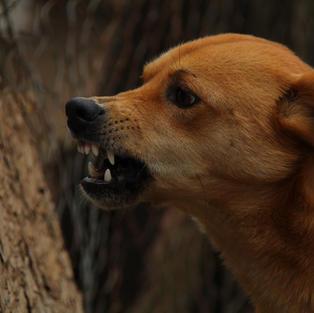 Dog Bites/Dog Violations