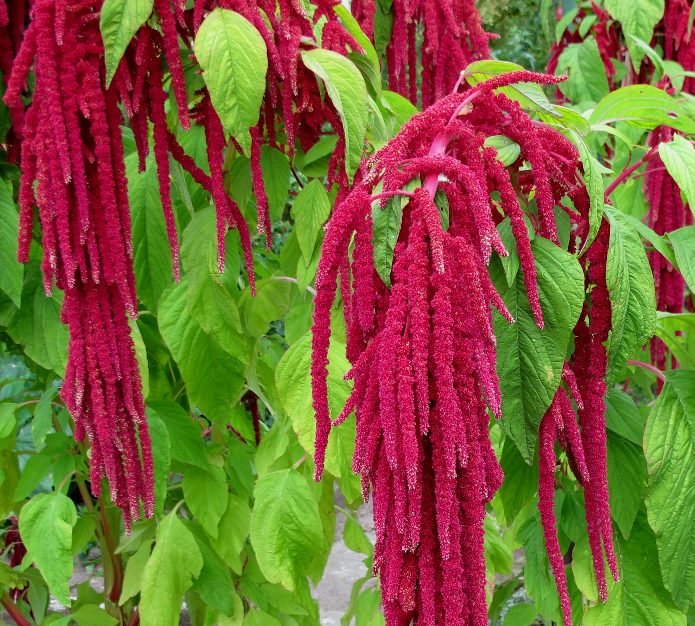 'Love Lies Bleeding'