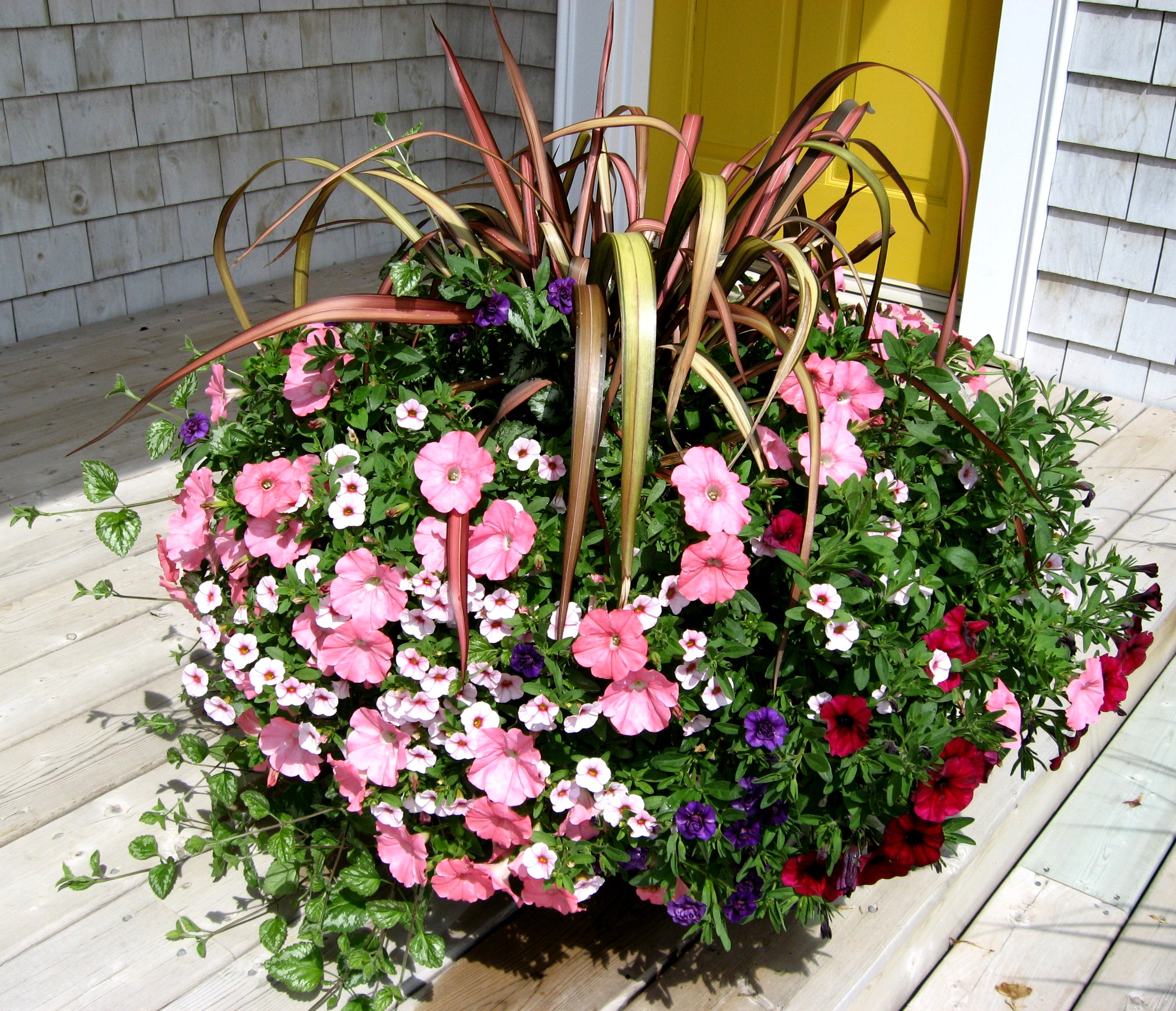 Choosing annuals for container gardens part 1 sunlight secret choosing annuals for container gardens part 1 sunlight secret gardens by crystal izmirmasajfo