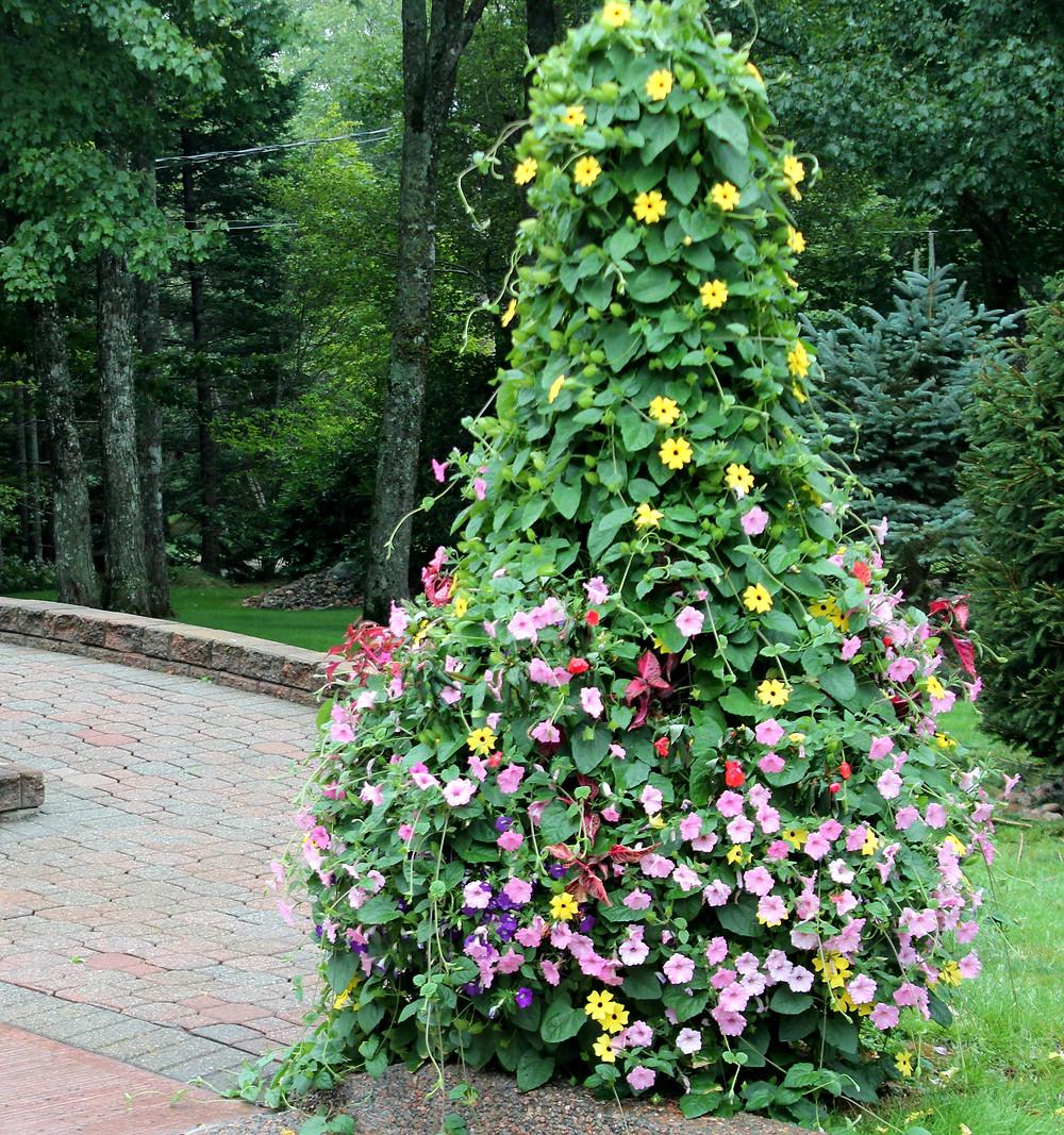 secret gardens by crystal thunbergia.jpg