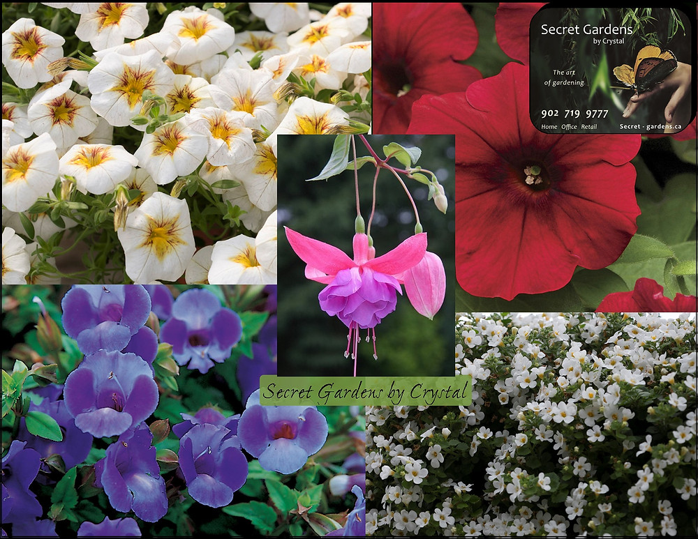 Secret Gardens by Crystal's top 5 trailing annuals