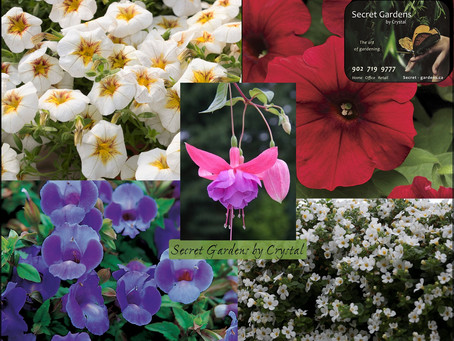 Containers Part 4: Annuals that Like to Hang Around