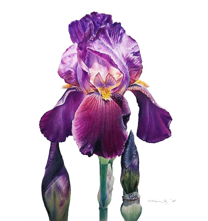 Iris Sq.jpg