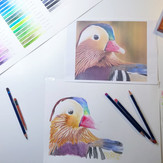 13 Years Old Student | Beginner | Individual lessons | Aquarelle Pencils