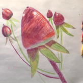 9 Years Old Student | Beginner | Individual lessons | Coloured pencil