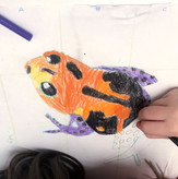 5 Years Old Student | Beginner | Group lessons | Coloured Pencil