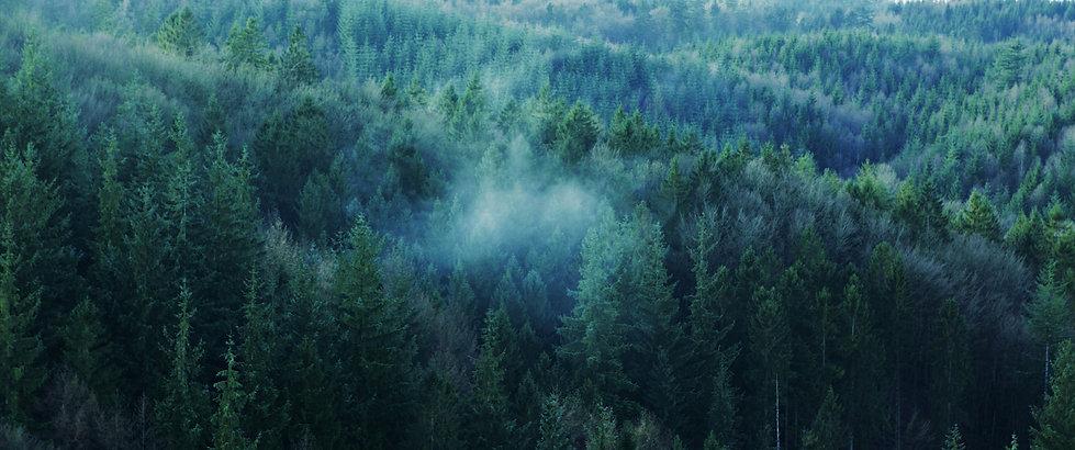 Nordic Noir 1.jpg