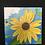 Thumbnail: Summer Sunflowers