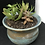 Thumbnail: Pot with Plants (Succulents)