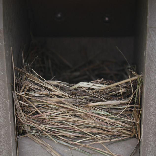 Recycled Bluebird House With Nest