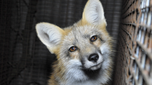 Historic Vote Bans Fur Farming in Czech Republic