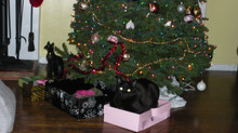 Holiday Tips: Including Our Animal Companions while Preventing Dangers