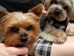 Alastair, Tess & Theo - About a Trip, Calming Anxiety & General Well-being