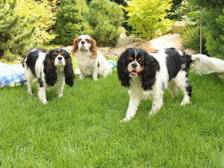 Charlie, Kerry, Kitty & Debbie