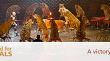 Ringling Brothers Tents are Coming Down! A Victory for Animals!