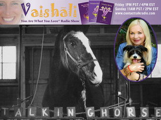 "What would ""Lady Wonder"" the Psychic Horse Have to Say Today? Find Out on ""You Are Wh"