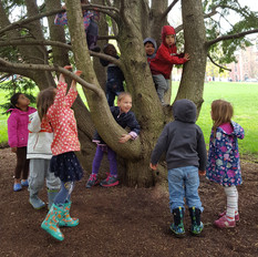 Children climb in a tree on the UVM campus.