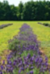Provenderow.jpg