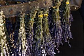 lavender-4363200.jpg