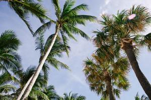 Sun & Palms